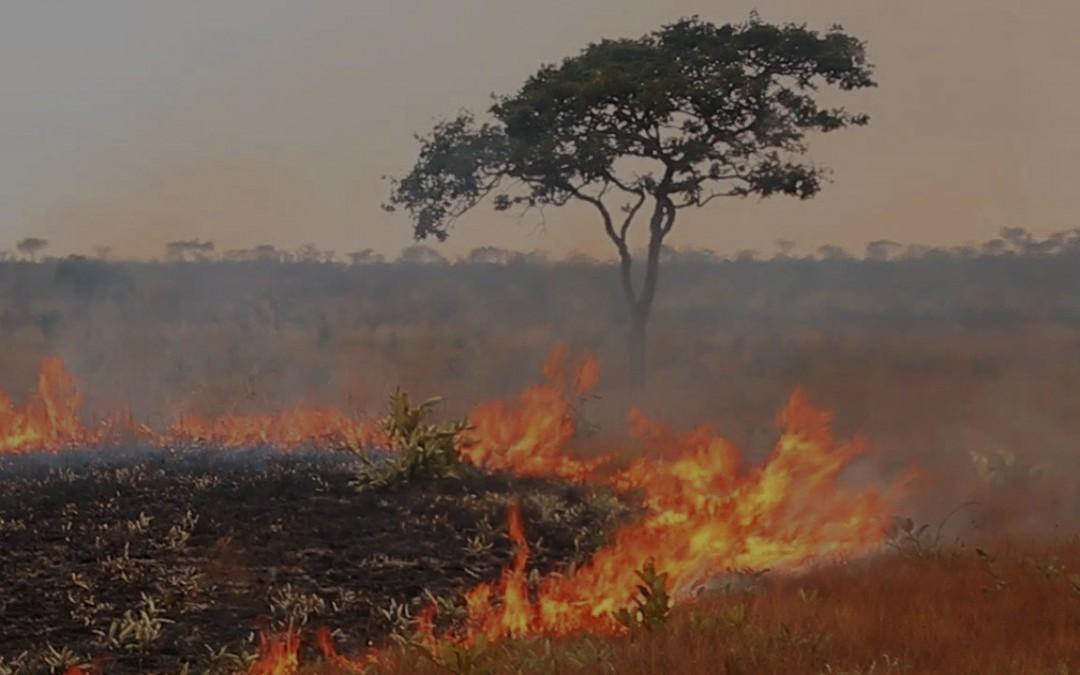 Bombo Lumene oiseaux et feu de brousse