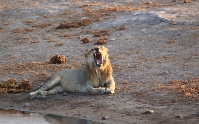 Namibie 3: 1376 km/ 8 jours dans Etosha Park