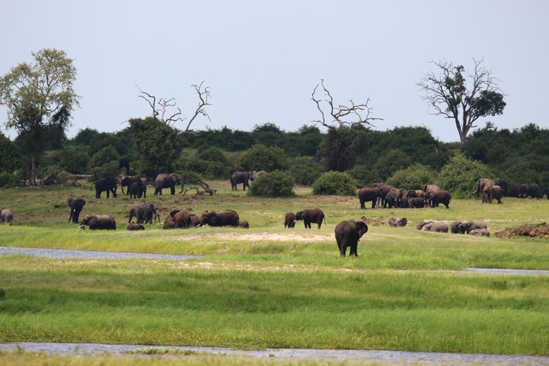 Botswana-Chobe River Front