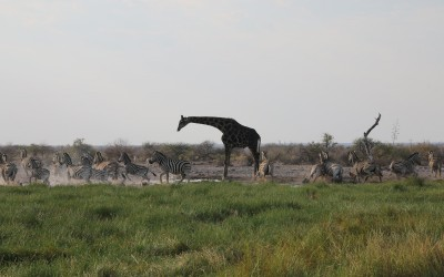Namibie 2:  Arrivée à Etosha Park