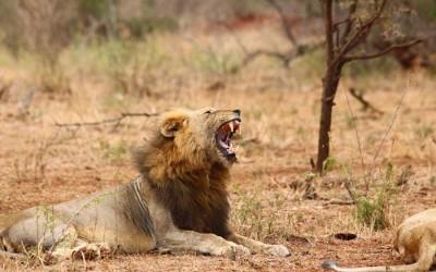 24: Afrique du Sud, Kruger Park